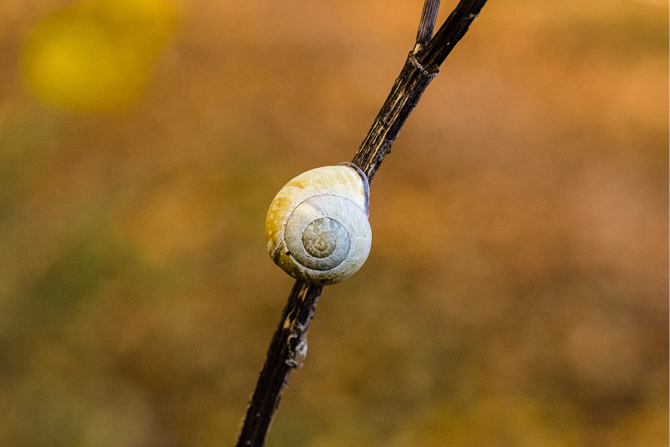 herfstwandeling-laurie-karine-by-manja-outdoor-buiten-4