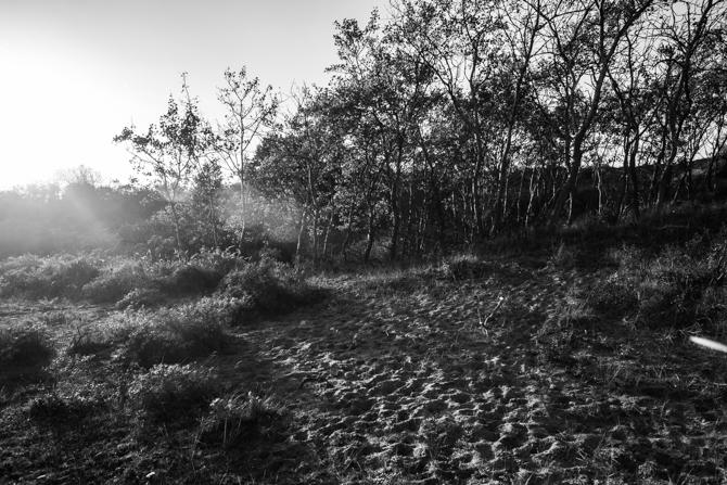 rondje-duin-en-kruidberg-by-manja-outdoor-buiten-10