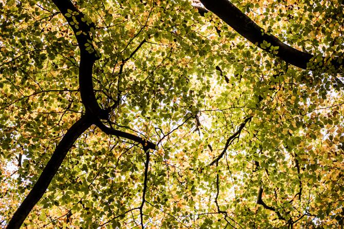 rondje-duin-en-kruidberg-by-manja-outdoor-buiten-15