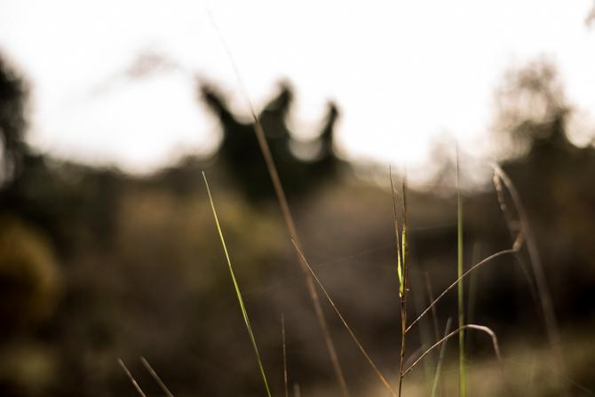 rondje-duin-en-kruidberg-by-manja-outdoor-buiten-18