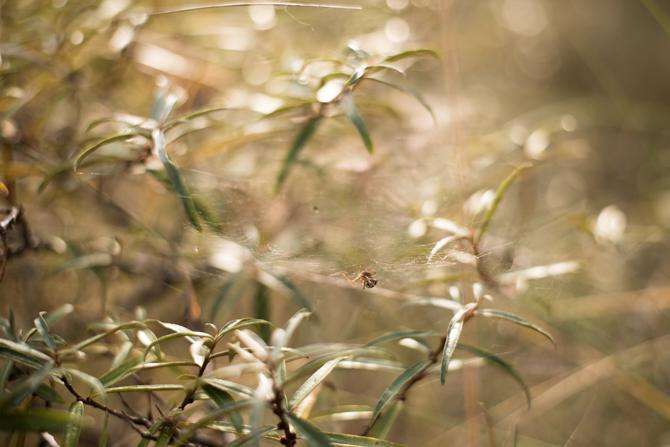 rondje-duin-en-kruidberg-by-manja-outdoor-buiten-19