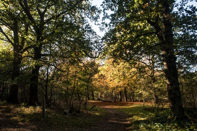 rondje-duin-en-kruidberg-by-manja-outdoor-buiten-4
