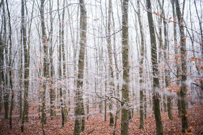 winter-wonderland-by-manja-outdoor-buiten-10