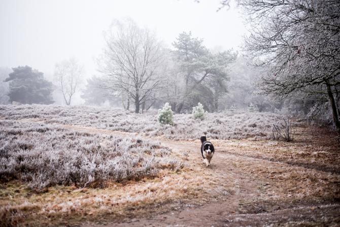 winter-wonderland-by-manja-outdoor-buiten-11