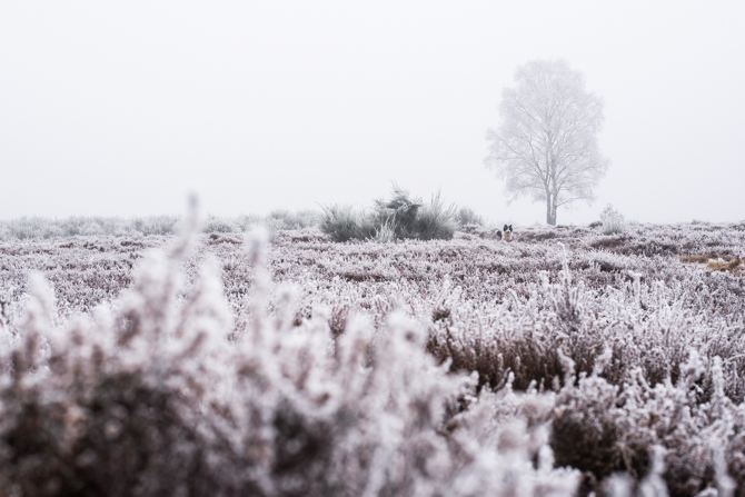 winter-wonderland-by-manja-outdoor-buiten-13