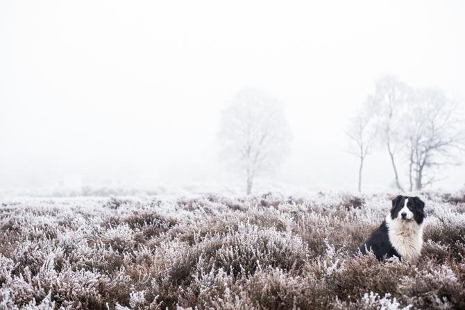 winter-wonderland-by-manja-outdoor-buiten-16