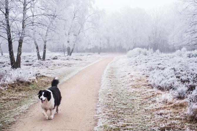 wandelroute Hoorbeboegse Heide By Manja outdoor buiten