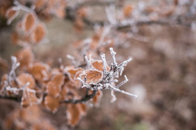 winter-wonderland-by-manja-outdoor-buiten-2