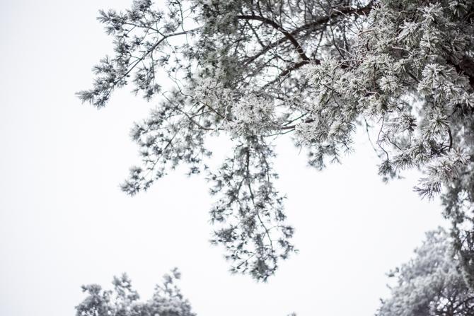 winter-wonderland-by-manja-outdoor-buiten-6