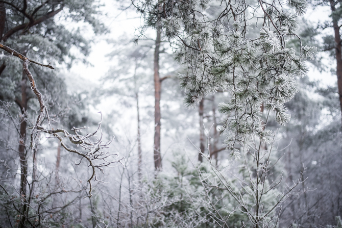 winter-wonderland-by-manja-outdoor-buiten-7