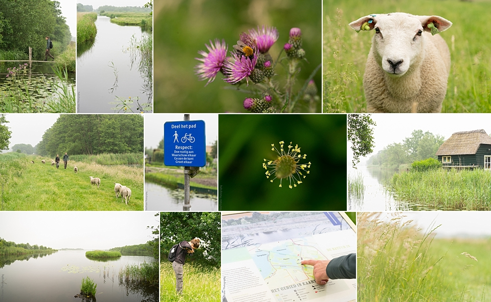 Ankeveense Plassen outdoor collage